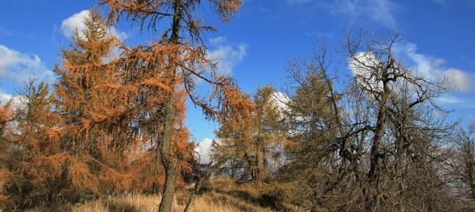 Bačkorová, Javorina, Skalnatá – jeseň 2015